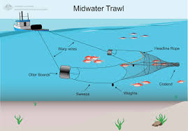 Midwater trawling