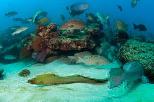Trawling effects on marine biodiversity
