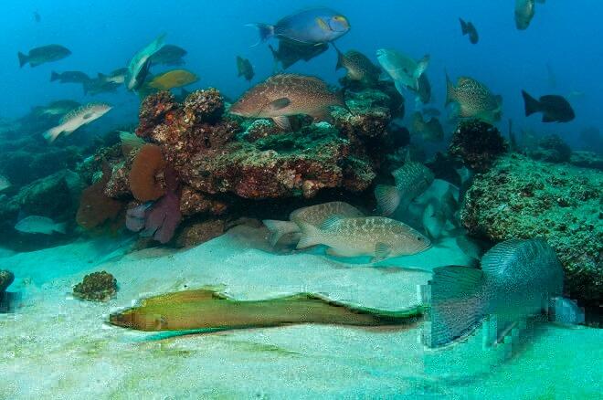 Trawling effects on marine biodiversity